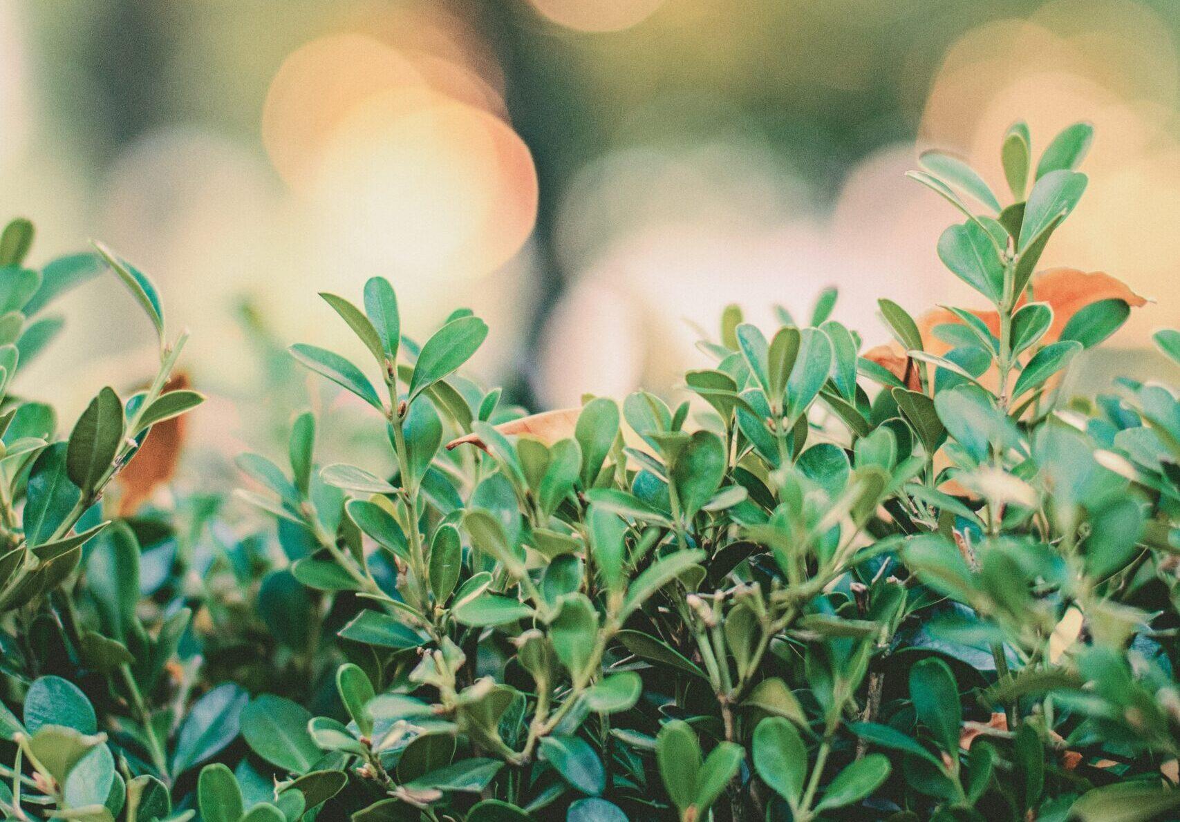 <植物愛が伝わる>園芸YouTuberのおすすめチャンネルをまとめてみた!