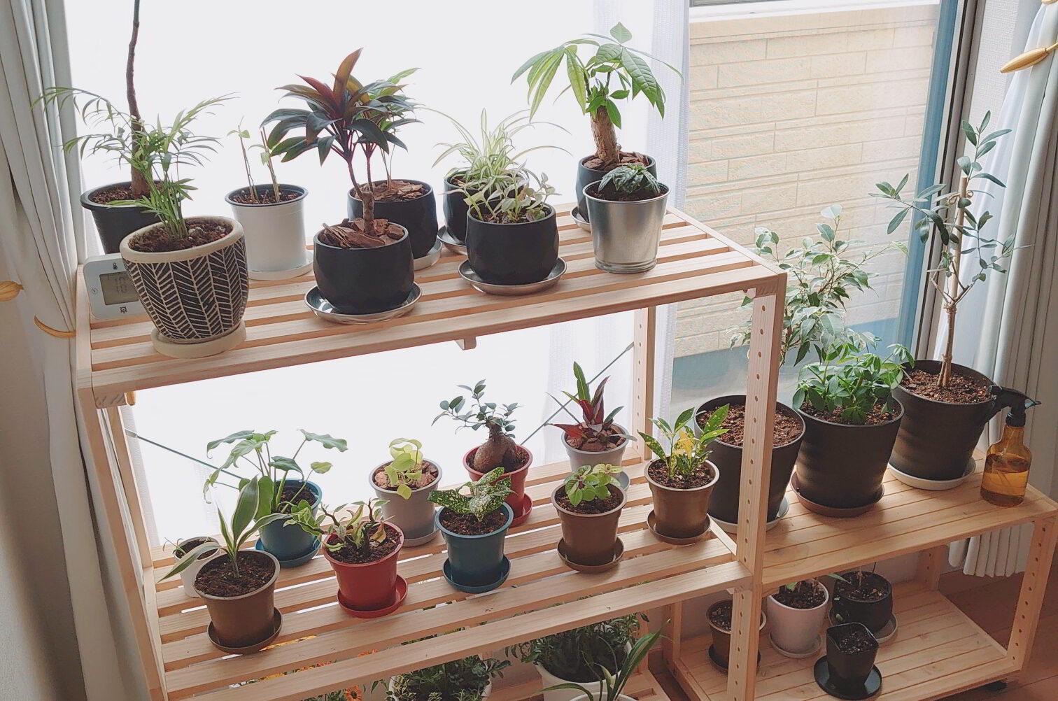 <何鉢持ってる?>観葉植物が半年も経たずに30鉢以上に増えていく様子がこちら